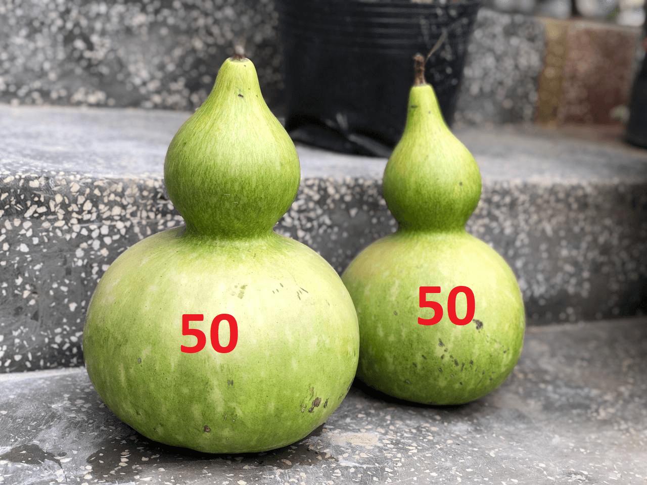 Xac-suat-thang-thua-thi-truong-50-50